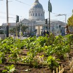 Is urban agriculture worth the space?
